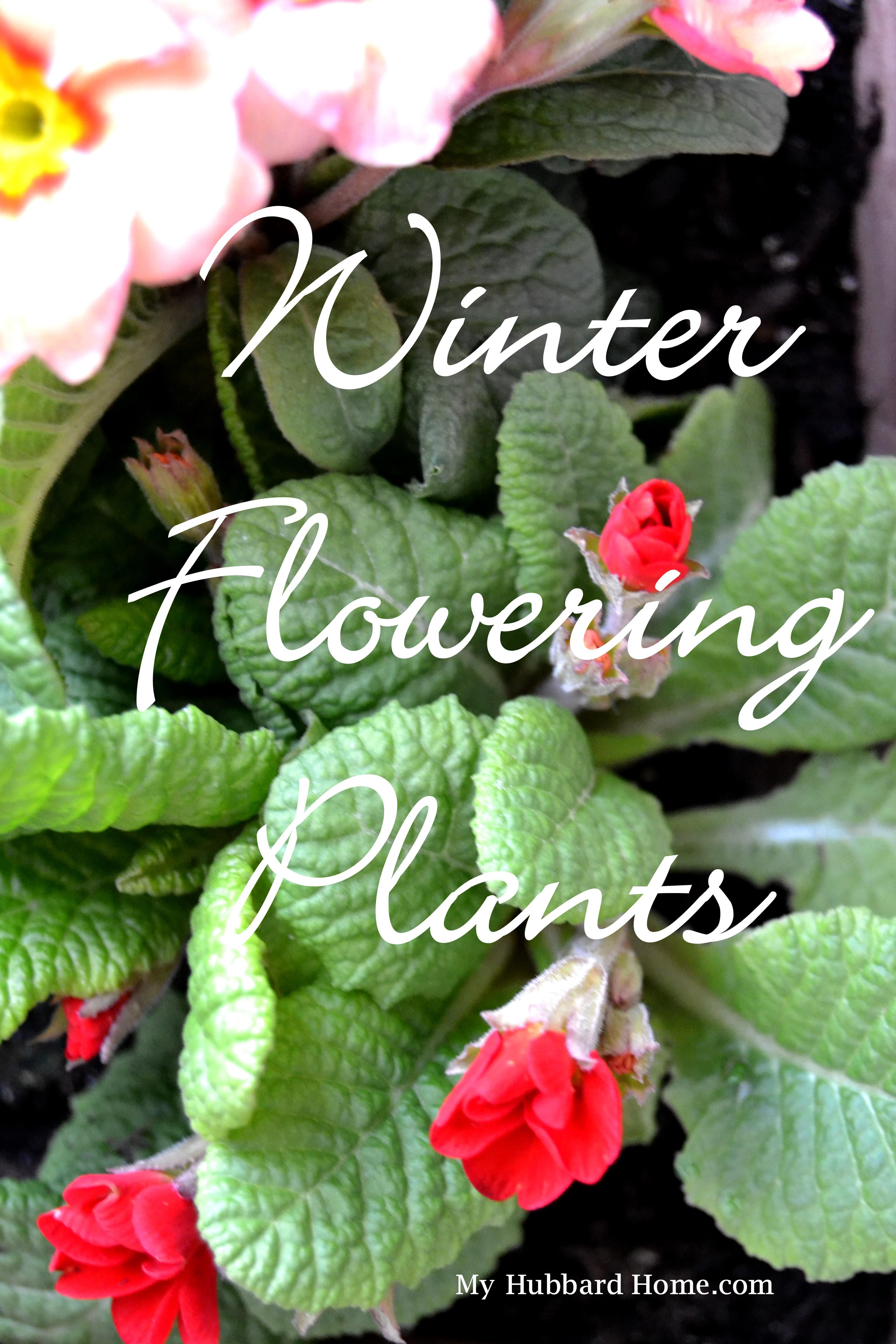 5 Winter Flowering Plants