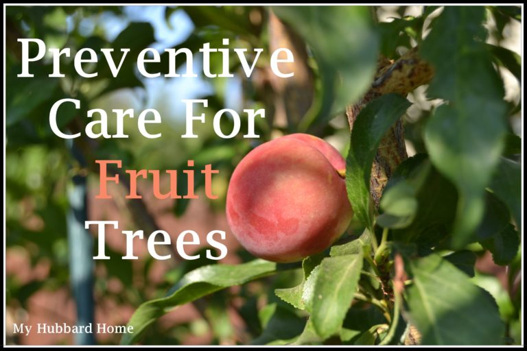 Fruit Tree Preventive Care